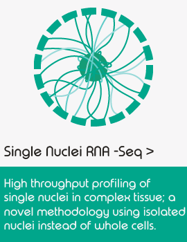 Single cell sequencing applications_scNuc-Seq